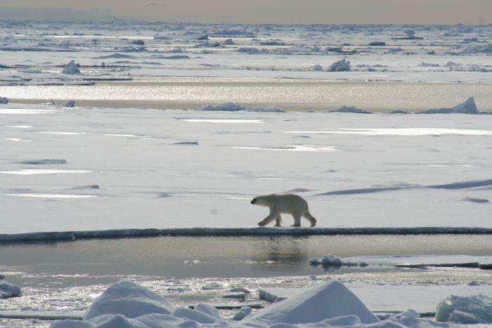 fotos de Ártico autor:Jordi Vendrell