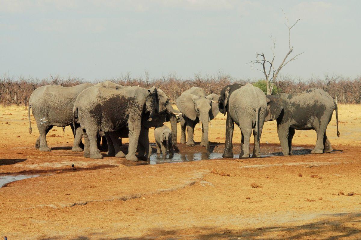 fotos de Safaris en África autor:Laia Póo