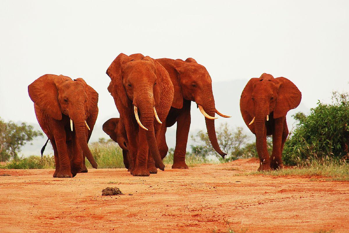 fotos de Safaris en África autor:Sunway Safaris