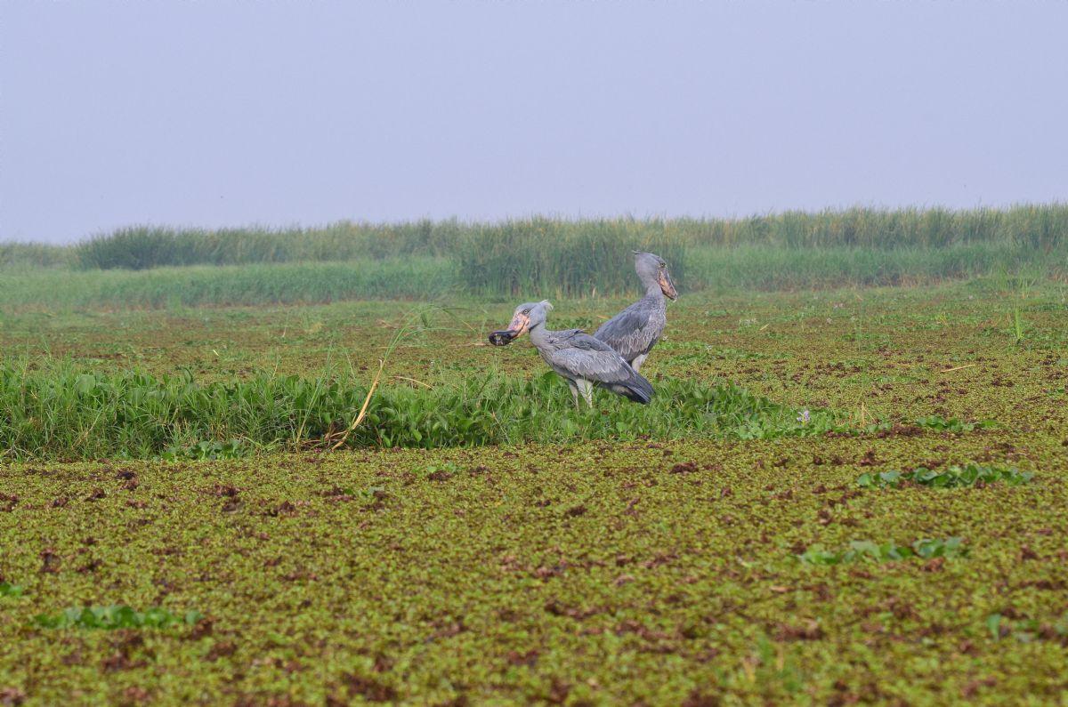 fotos de Safaris en África autor:Natalia Giner