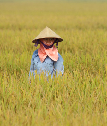 Vietnam avanza hacia el futuro a pasos rápidos y hoy en día es un país moderno que recibe una gran ... <br> <a class='vermellteula'>Seguir leyendo >>></a>