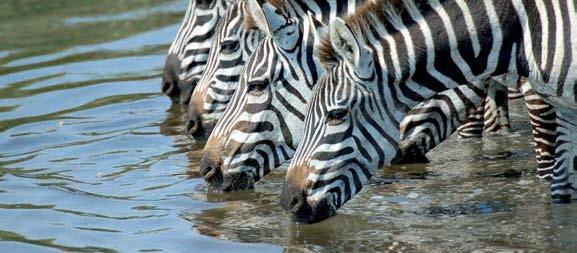 Vida Salvaje y Safaris