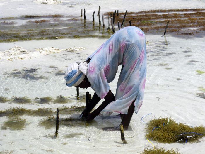fotos del viaje a Tanzania Safari Tuareg: Lago Natron, travesía del Serengeti y Ngorongoro autor:Francisco Gómez Urías