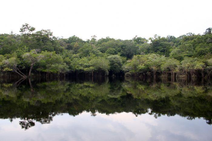 fotos del viaje a Brasil Expedición selva amazónica autor:Marcelino Blanco