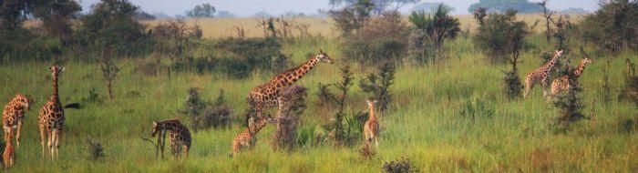 fotos del viaje a Uganda Safari Tuareg autor:Miguel Marquez
