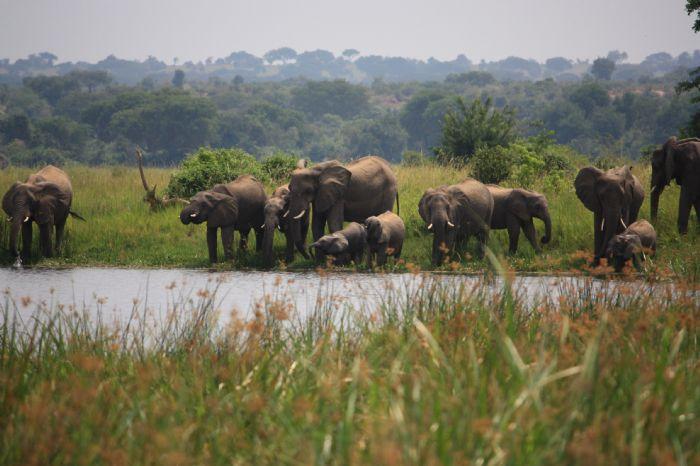 fotos del viaje a Uganda y Rwanda La perla de África, colinas de Rwanda, lago Kivu y volcán Nyiragongo  autor:Miguel Marquez
