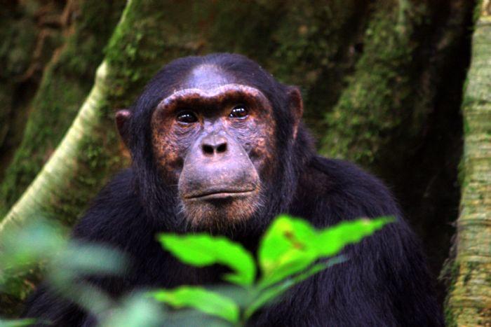 De Murchison Falls a la selva de Bwindi. Gorila trek