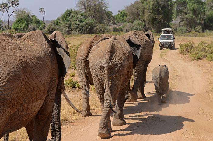 fotos del viaje a Kenya y Tanzania Safari Kamili autor:Ignasi Rovira