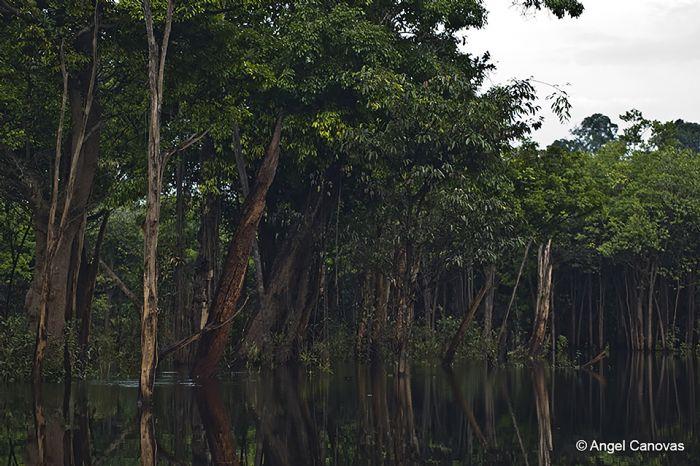 fotos del viaje a Brasil Expedición selva amazónica autor:A.Canovas