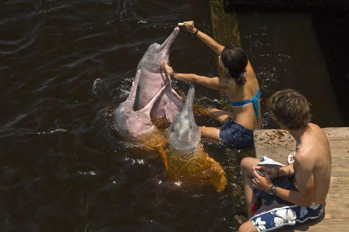 fotos del viaje a Brasil Expedición selva amazónica autor:A. Canovas