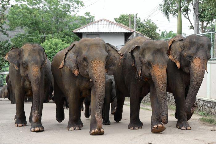 fotos del viaje a Sri Lanka Especial Festival Perahera autor:Montse Torres