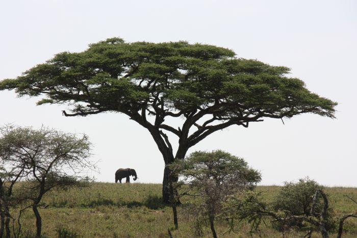 fotos del viaje a Kenya, Tanzania y Zanzibar Memorias de África autor:Antonio Porras