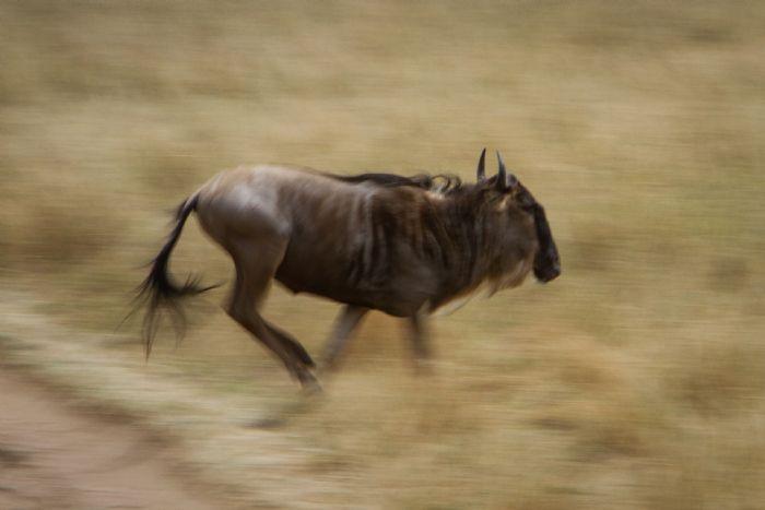 fotos del viaje a Kenya y Tanzania Safari Kamili autor:Jose Miguel
