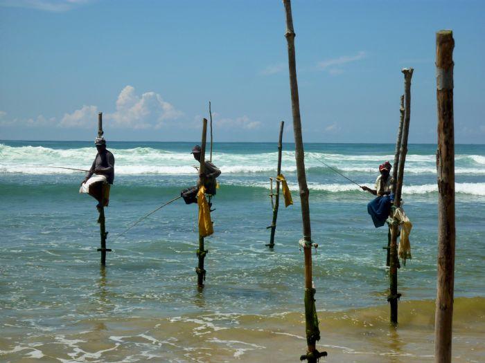 fotos del viaje a Sri Lanka Especial Festival Perahera autor:Joan Bartomeu