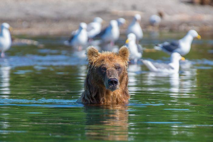 fotos del viaje a Rusia - Kamchatka Ríos, osos y volcanes autor:Javier Pulido