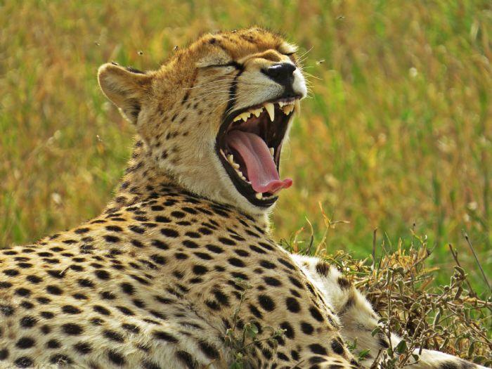 fotos del viaje a Tanzania Safari Tuareg: Lago Natron, travesía del Serengeti y Ngorongoro autor:Gerard Muntada