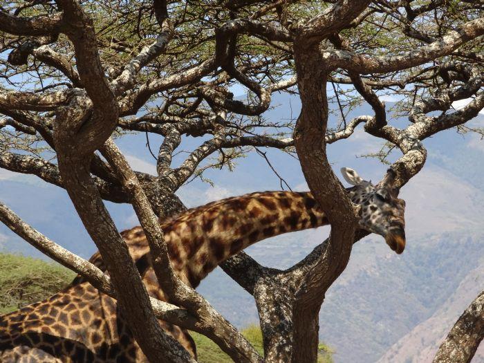 fotos del viaje a Tanzania Safari Tuareg: Lago Natron, travesía del Serengeti y Ngorongoro autor:Marta Almuni