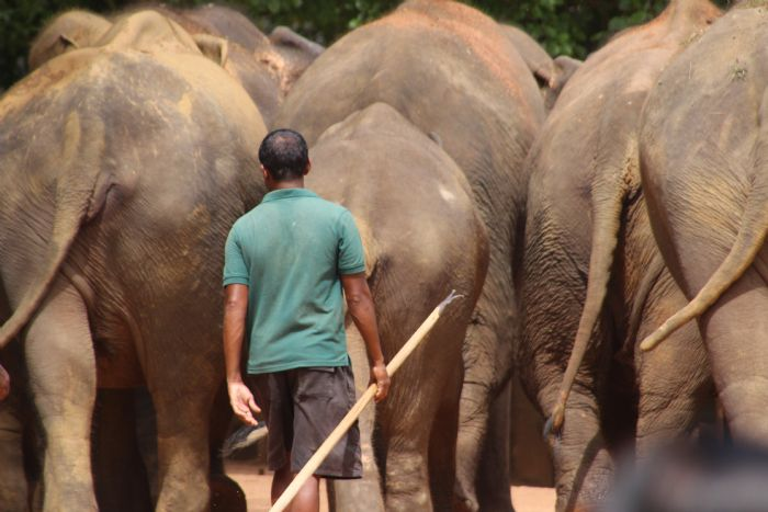 fotos del viaje a Sri Lanka Especial Festival Perahera autor:Conchi Serrano