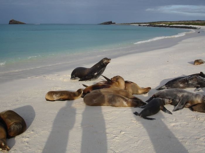 fotos del viaje a Ecuador Islas Galápagos en el yate Floreana autor:Ramon Claveria
