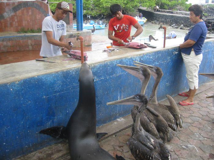 fotos del viaje a Ecuador Islas Galápagos en el yate Floreana autor:Lourdes Teixido