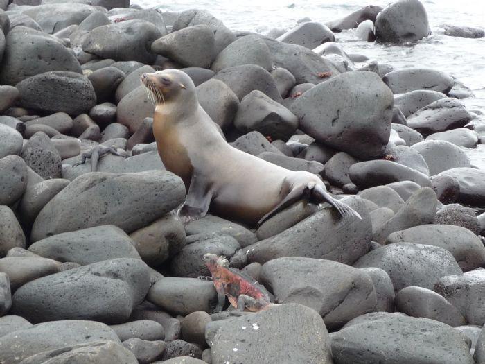 fotos del viaje a Ecuador Islas Galápagos en el yate Floreana autor:Patricia Tasker
