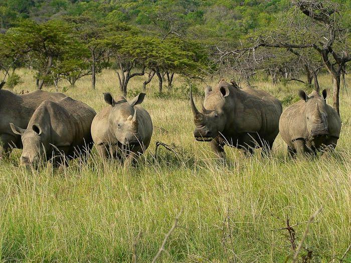 fotos de [pagina.descripcion] autor:Sunway Safaris