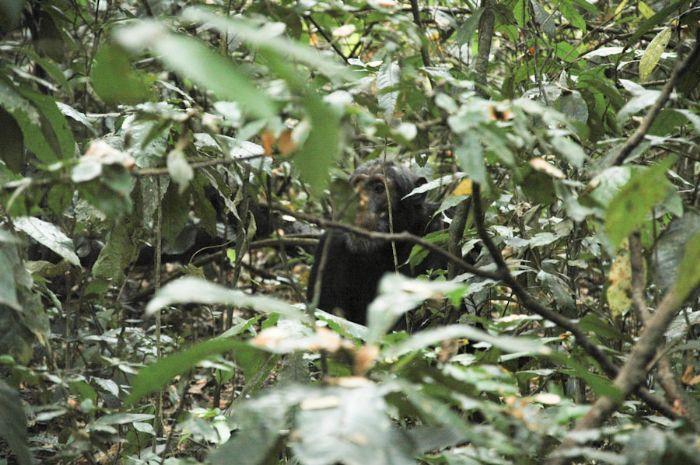 fotos del viaje a Uganda y Rwanda La perla de África, colinas de Rwanda, lago Kivu y volcán Nyiragongo  autor:Montse