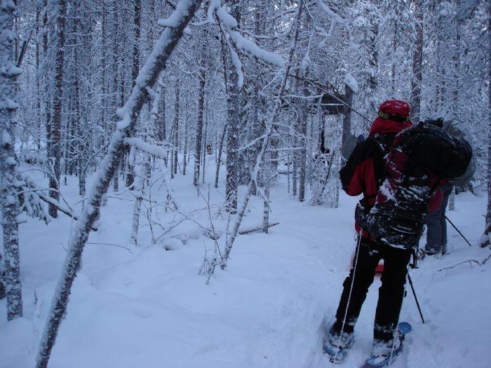 fotos del viaje a Finlandia Multiaventura invernal en la región de Koillismaa autor: