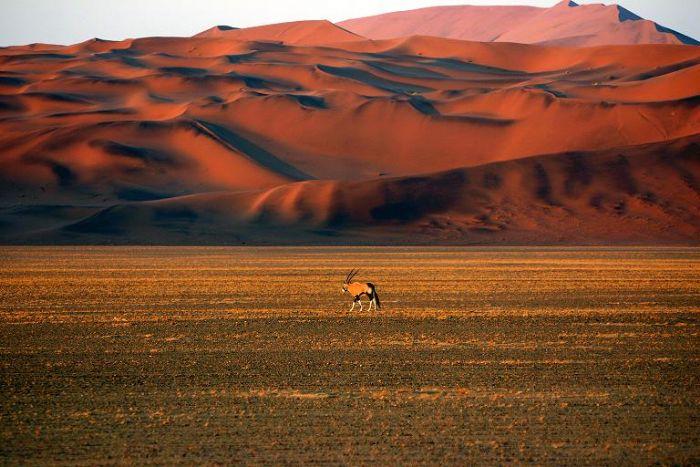 fotos de Namibia Observando la Vía Láctea. Safaris y Estrellas autor:J Pouget