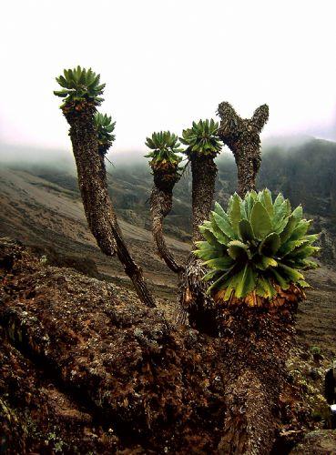 fotos del viaje a Tanzania Ascensión al Kilimanjaro. Marangu y Machame: las rutas 'clásicas'  autor:Ana Maria Antunez
