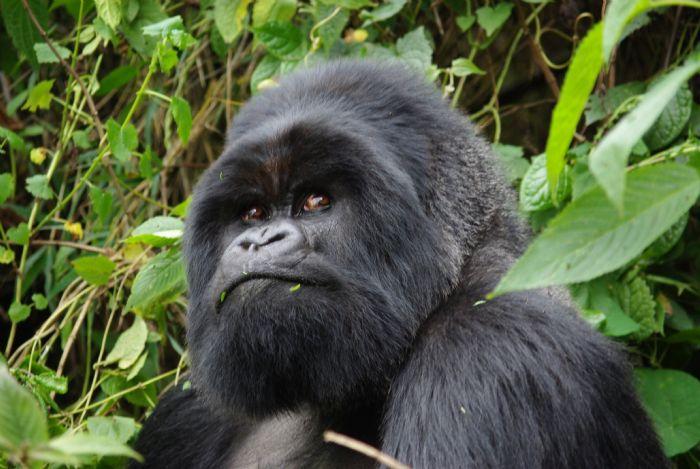 Gorila trek en Uganda | Murchison Falls a Bwindi