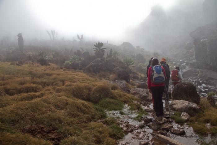 fotos del viaje a Tanzania Ascensión al Kilimanjaro: ruta Rongai autor:Javier Valero