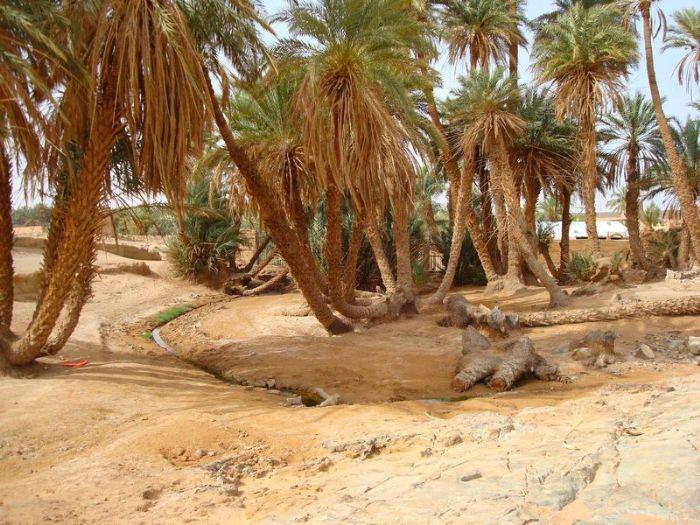 fotos del viaje a Marruecos Ciudades Imperiales y caminatas por los valles del Atlas autor:Brahim Lamkhantar