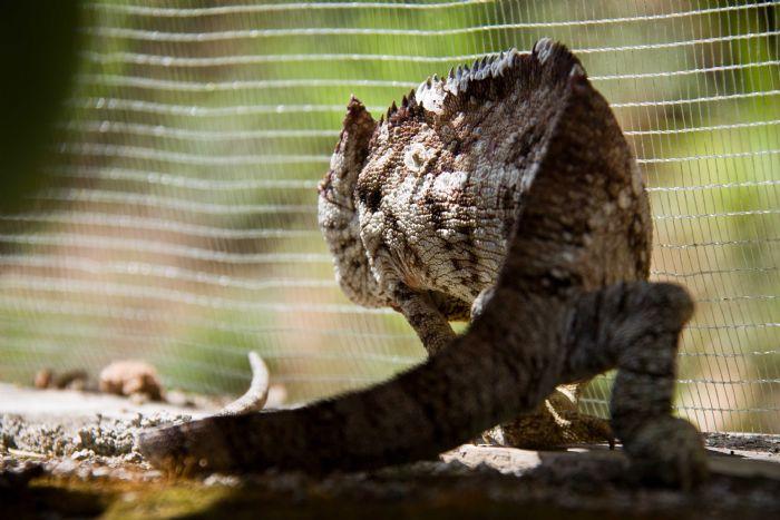 fotos del viaje a Madagascar Descubre Madagascar autor:Luis Touya
