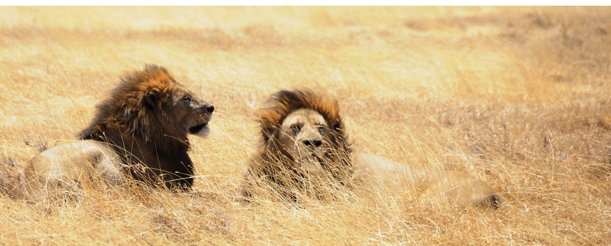 Kenya y Tanzania - Safari Kamili