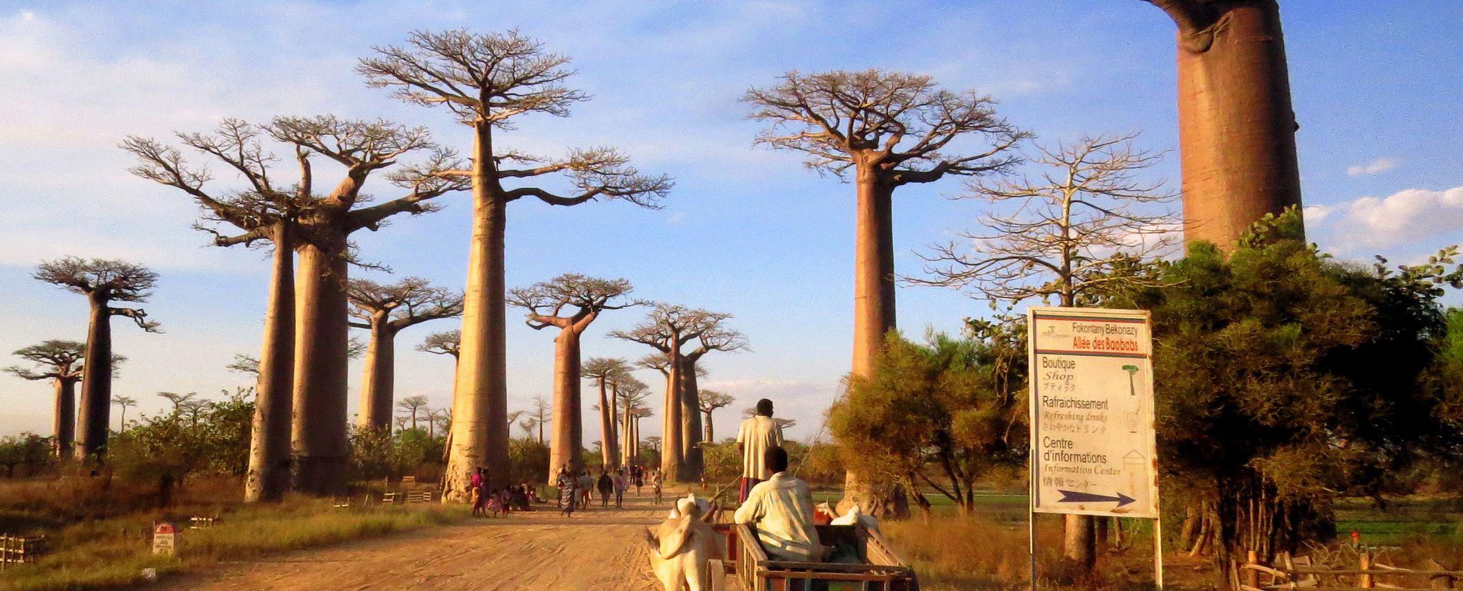 Madagascar - Esencias del Sur