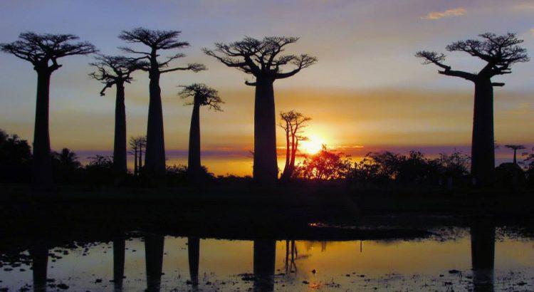Avenida de los baobabs en Madagascar | Foto © Beatriz Pérez