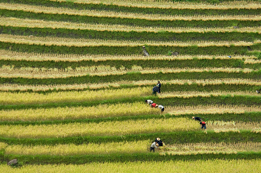 Arrozales en Vietnam | Foto © Ignasi Rovira