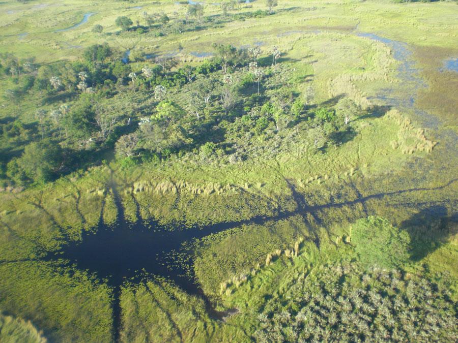 Imagen aérea del delta | © Mercè Gayà