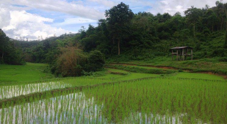 Campos de arroz en el norte de Tailandia | Foto © Una idea, un viaje