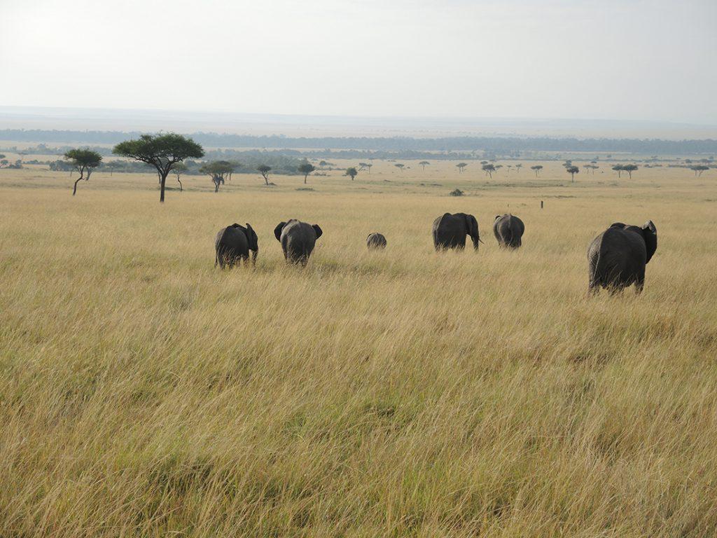 Una manada de elefantes en Serengeti | Foto © Alex Badosa