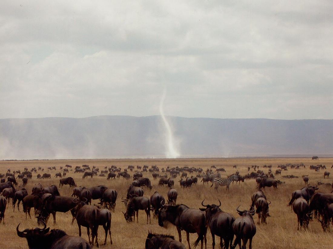 Ñus pastanto en Tanzania | Foto © J. Escribano