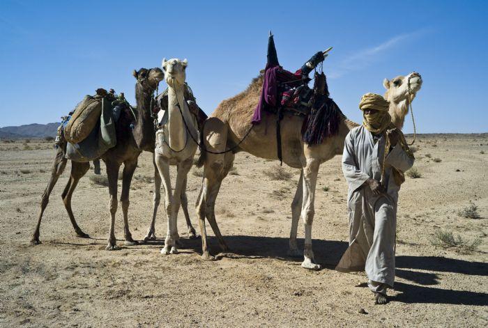 Viajees a Argelia. Camelleros Tuareg. Autor: Pedro Martin