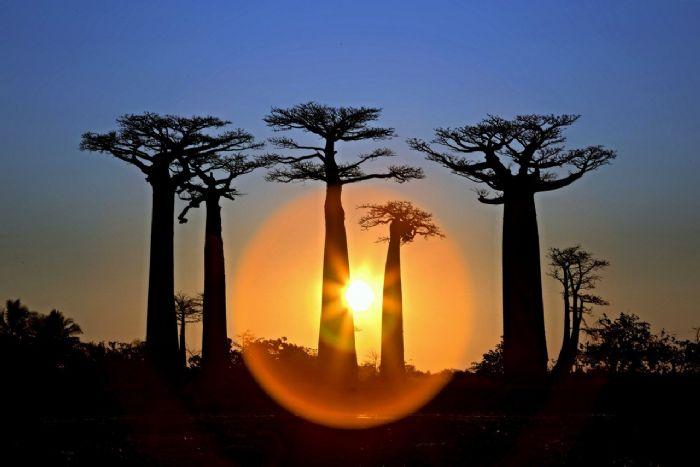 VIaje a Madagascar - Baobabs Pilar Julia