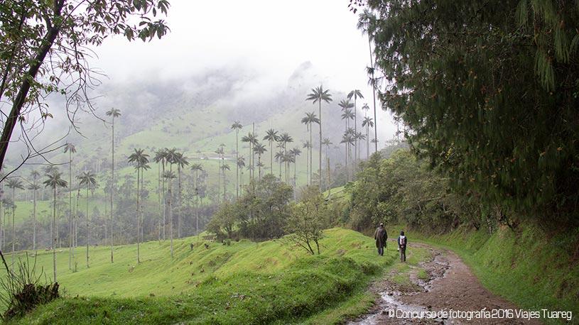 Viaje a Colombia - Senderismo, Valle Cocora Juan Recio