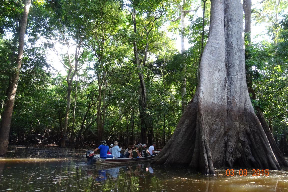 """Selva inundada """"igapó"""" a inicios de setiembre cuando el nivel ha bajado unos 4 metros (ver marca de agua en el tronco)."""