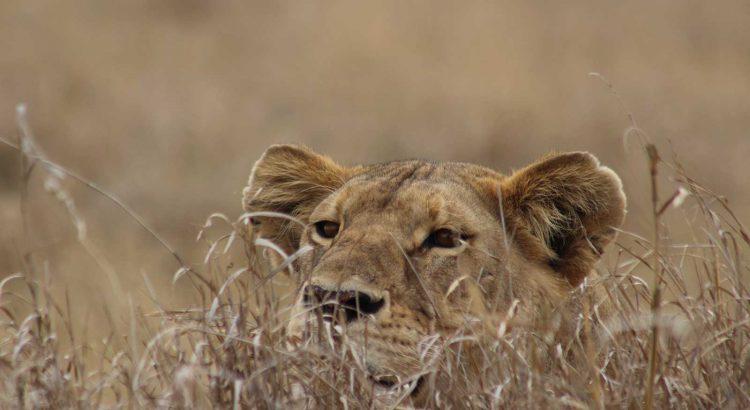 Begoña delgado | Safaris en Tanzania verano 2019