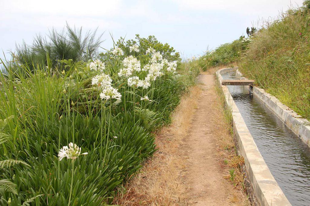 Caminos del agua y flores Esperanza Morán