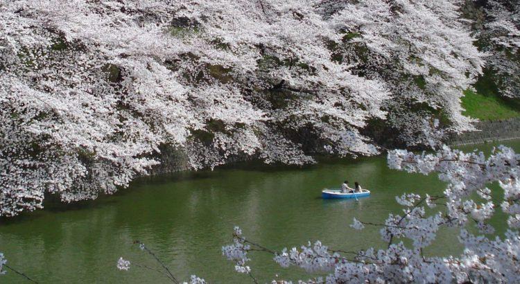 Sakura viaje a Japón