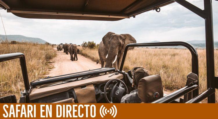 safari-en-directo-tuareg
